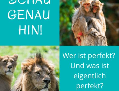 Zu viele Affen und immer weniger Löwen
